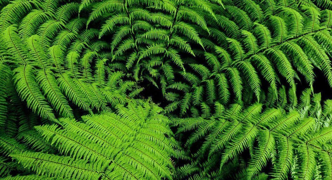 Plantas para jardines verticales verdtical magazine - Tipos de plantas de exterior ...
