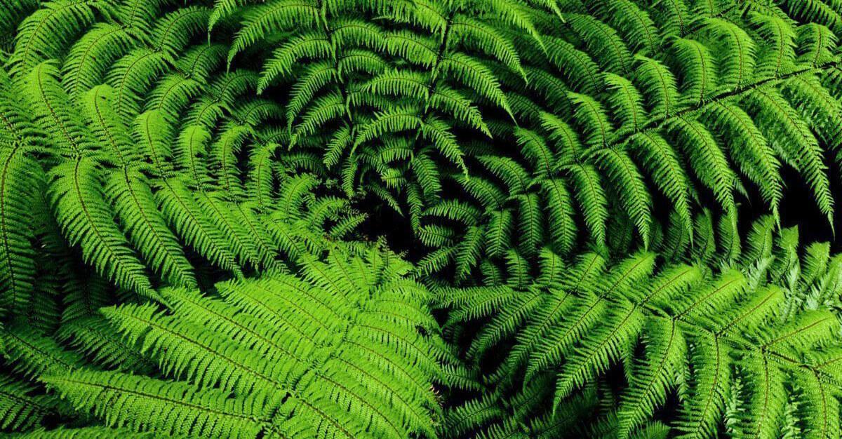 Plantas para jardines verticales verdtical magazine for Que planta para muro exterior vegetal