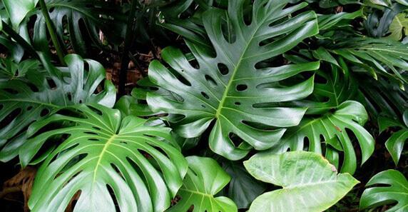 Plantas de sombra y plantas de sol