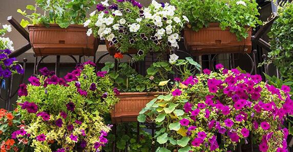 Plantas para jardines verticales verdtical magazine for Decoracion con plantas para jardin