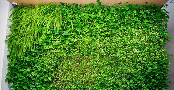 Elegir plantas para un jardín vertical
