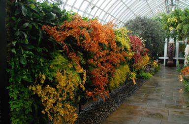 Orquídeas para Jardines Verticales