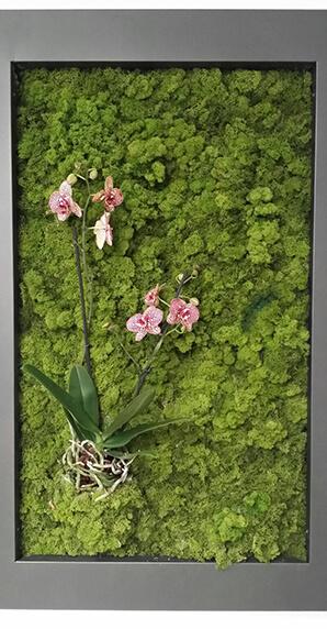 Moss musgo jardines
