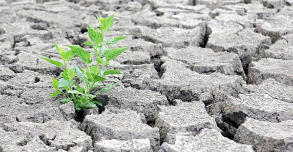Hemos perdido la batalla contra el cambio climático