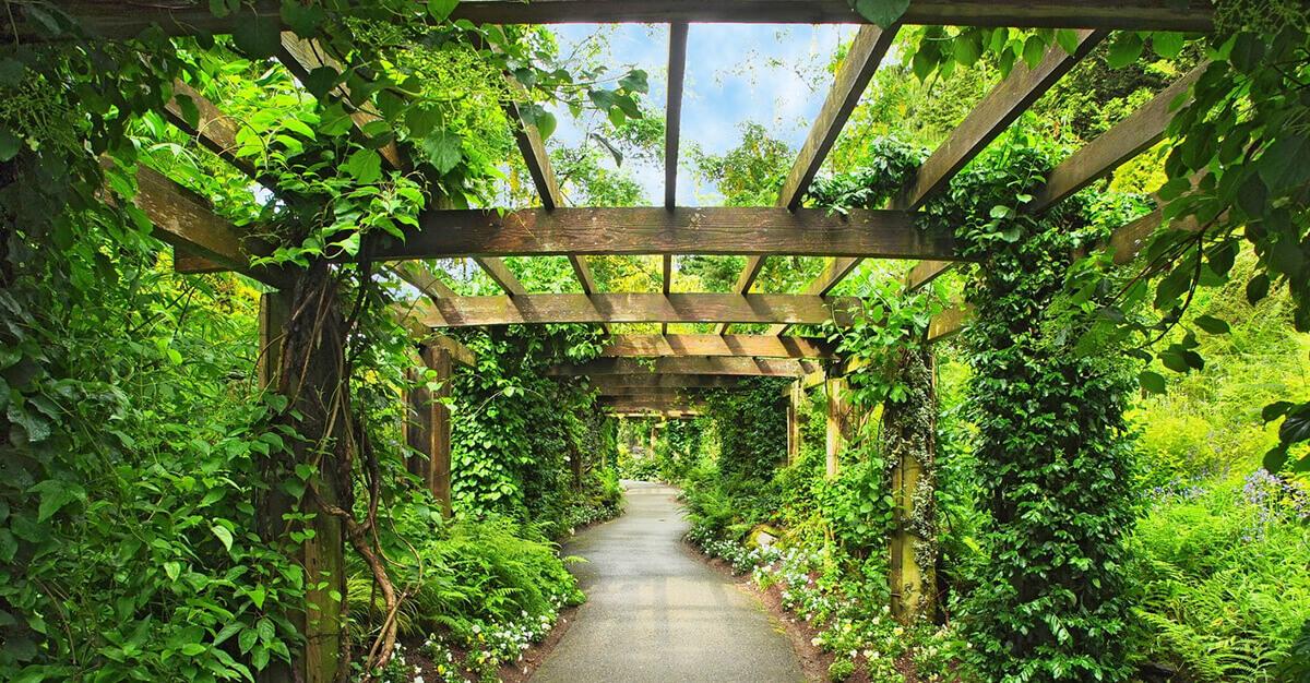 Plantas trepadoras en jardines verticales verdtical magazine - Tipos de plantas de exterior ...